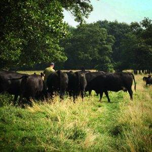 Black Angus natuurvlees uit Nederlandse natuurparken