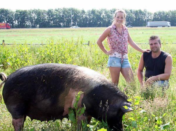 Veluws scharrelvarken landvarken