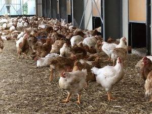 vleeschenco leenders kip bijzonder kippenvlees